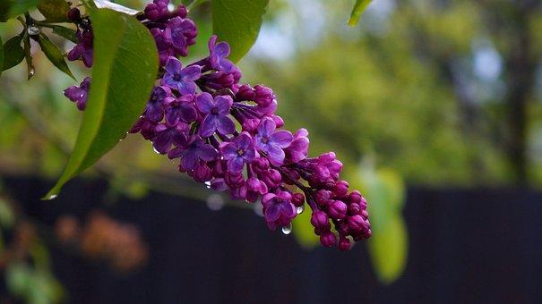 Nature, Plants, Tree, Green, Foliage, Violet, Flowers