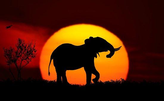 Sunset, Landscape, Elephant, Nature, Adler, Silhouette