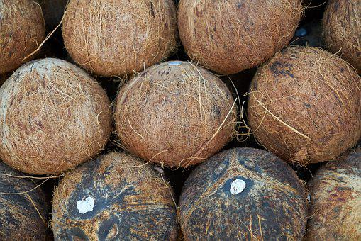 India Coconut, Fruit, Palm, Tropical, Food, Delicious