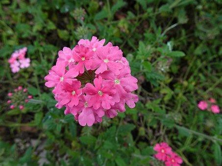 Plant, Flower, Flowering, In Full Bloom, Natural, Petal