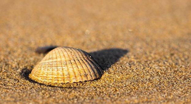 Shell, Beach, Sea, Sand