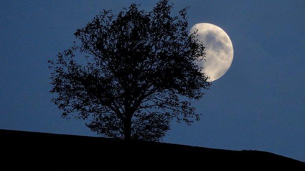 Nature, Night, Sky, Moon Tree, Landscape, Dark, Space