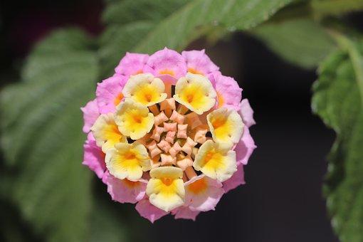 Flower, Plant, Garden, Nature, Pink, Spring, Summer