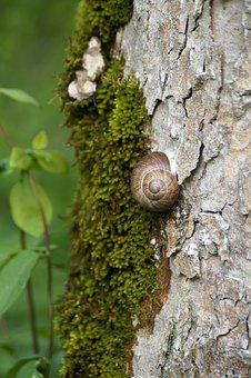 Snail, Support, Tribe, Bark, Shell, Spiral, Nature