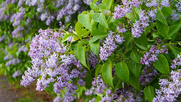 Nature, Plants, Twigs, Green, Leaflet, Violet, Flowers