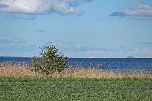 View, Bodden, Baltic Sea, Tree, Free View, Coast