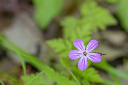 Wildflower, Nature, Flora, Spring, Plant, Purple