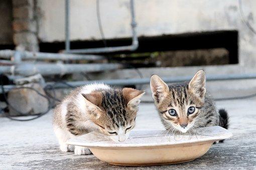 Kitten, Kittens, Cat, Pet, Animal, Cute, Adorable, Eyes