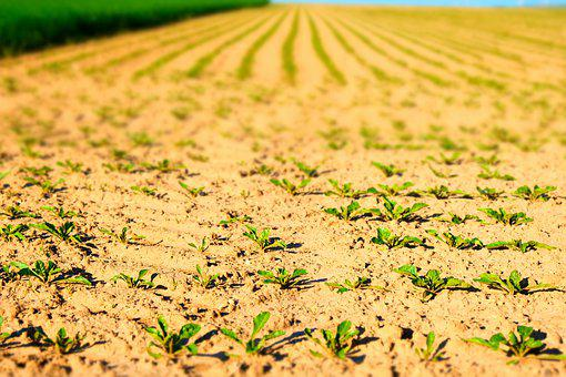 Arable, Seedlings, Field, Spring, Agriculture, Nature