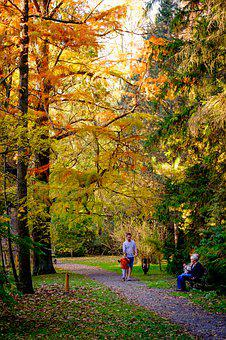 Park, Autumn, Tree, Nature, Outdoors, Wood, Forest