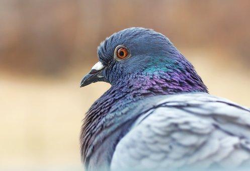 Dove, Bird, Animals, Pen, Nature, Beak, Flight