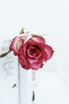 Roses, Flowers, Books, Pink, White, Romantic, Read