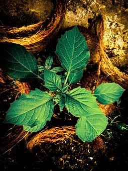 Plant, Green, Flower, Leaf, Beauty, Stalk, Root