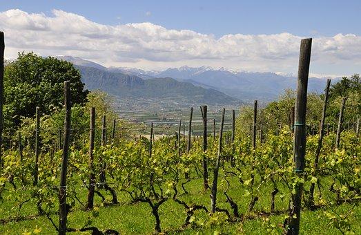 Vineyard, Hill, Landscape, Piemonte, Nature, Campaign