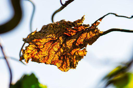 Leaves, Autumn, Fall Foliage, Autumn Colours