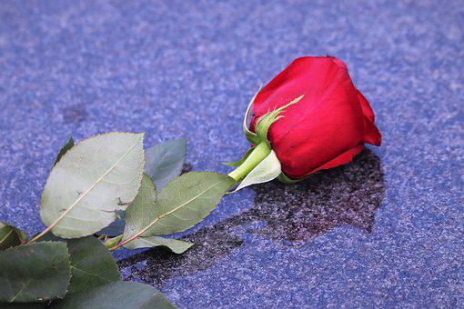 Single Red Rose, Black Marble, Love Symbol, Condolence