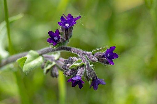 Macro, Flower, Wildflower, Nature, Spring, Plants