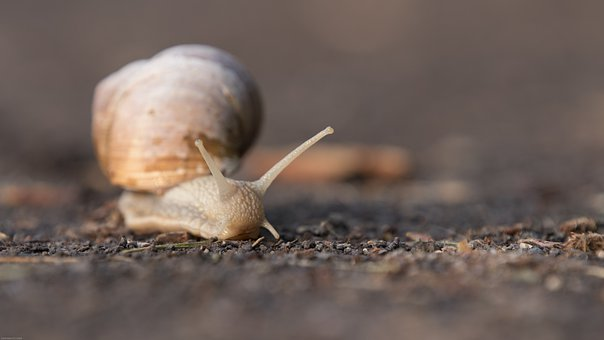Snail, Shell, Animal, Nature, Slowly, Mollusk, Close Up