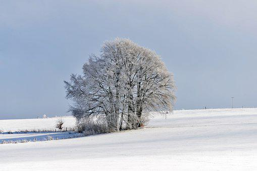 Landscape, Winter, Snow, Cold, Nature, Wintry, Tree