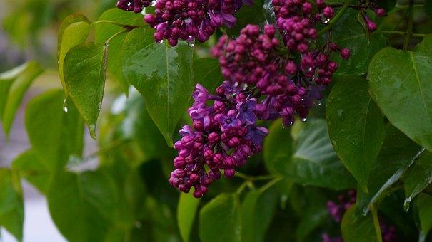 Nature, Plants, Green, Foliage, Violet, Purple, Flowers