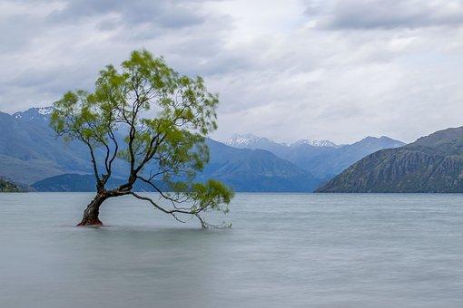 Tree, Wanaka, Alone, Lake, Nature, Wanaka Tree, Scenic