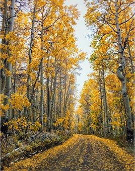 Mountain, Road, Country, Autumn, Fall, Yellow, Aspen