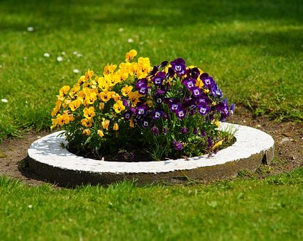Pansy, Planting, Rush, Eye Catcher, Colorful, Flora