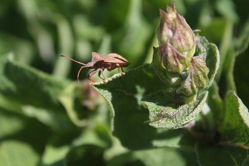 Bug, Brown, Leather Bug, Creepy-crawlies, Nature