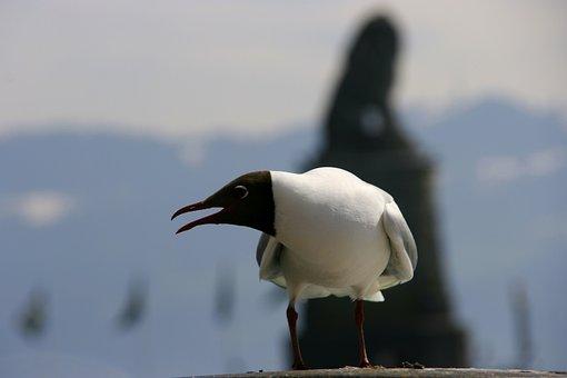 Seagull, Cry, Bird, Lake, Bill, Animal, Nature, Plumage