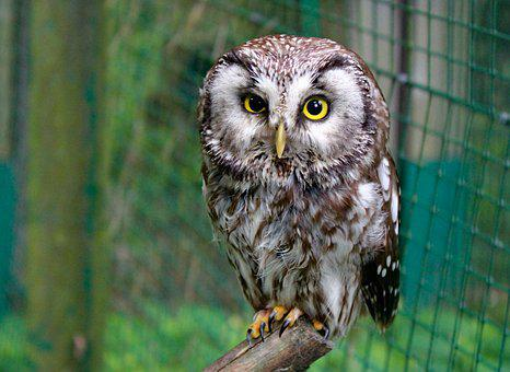 Owl, Tawny Owl, Bird, Animal, Night, Cub, Zoo, Cage