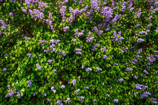 Without, Flower, Pattern, Flowers, Floral, Spring