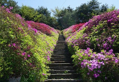 Spring, Nature, Flowers, Plants, Garden, Stairs, Azalea