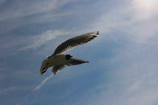 Flying, Freedom, Wing, Bird, Sky, Nature, Air, Animal