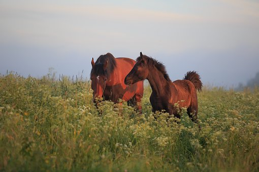 Horse, Pasture, Animal, Nature, Horses, Pony, Mammal