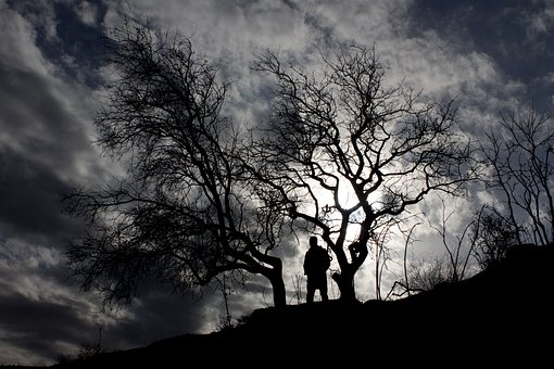 Silhouette, Tree, Sky, Black, In The Evening, Human