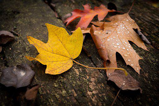 Leaves, Fall, Autumn, Nature, Tree, Colorful, Forest