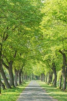 Avenue, Road, Cobblestones, Trees, Away, Mood