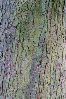 Bark, Tree, Wood, Tribe, Tree Bark, Nature, Plant