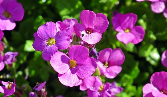 Flowers, Spring, Garden, Nature, Beauty, Macro
