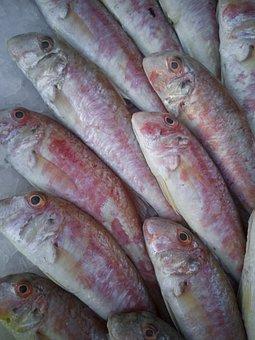 Fish, Animal, Live, Marine, Nature, Hunting, Sunday