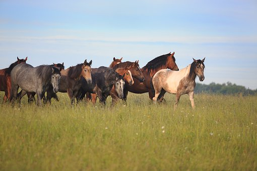 Horses, Grass, Horse, Animal, Nature, Mammal, Meadow