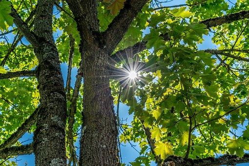 Tree, Sunlight, Broken, Plenty Of Natural Light, Nature
