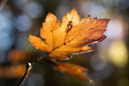 Autumn, Morning, Leaf, Forest, Trees, Nature, Sunrise