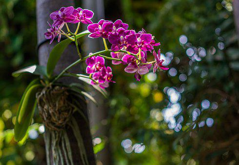 Orchid, Purple, Wild, Flowers, Bloom, Blossom, Nature