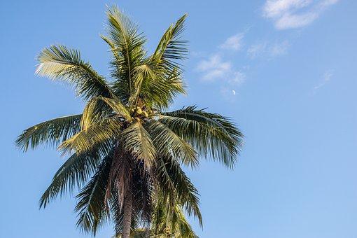 Palm Trees, Paradise, Sky, Moon, Tropics, Vacations