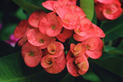 Flowers, Petals, Garden, Nature, Spring, Flora, Summer