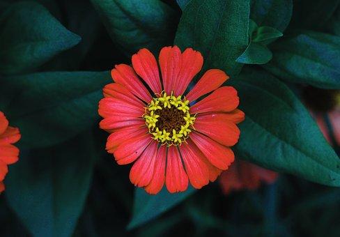 Flower, Petal, Garden, Petals, Plant, Nature, Flora