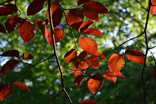 Foliage, Backlighting, Nature, Red, Sun