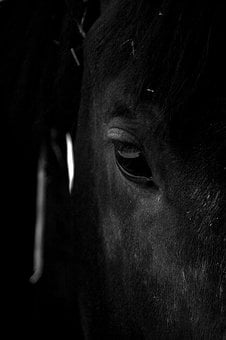 Horse, Stallion, Animal, Nature, Ride, Mane, Rural