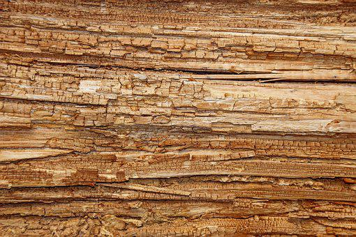 Wood, Tree, Wood Rot, Log, Structure, Rot